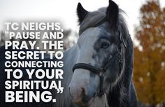 SD Taking Care of Business Sd, Pray, Coaching, Spirituality, Horses, Business, Animals, Training, Animales