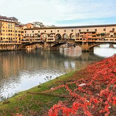 The magnificient Old Bridge of Florence #love #florence #tuscany #firenze #wonderful #art #iloveyou #instacool #instalove #instamood #instatravel #igers #igersfirenze #igersitalia #volgoitalia #volgotoscana #volgofirenze #pontevecchio #instapic  Photo credit: @lifeinfirenze