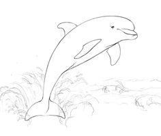 Dolphins coloring pages | Free Coloring Pages