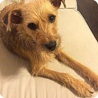 Adopt A Pet :: Porter - San Antonio, TX