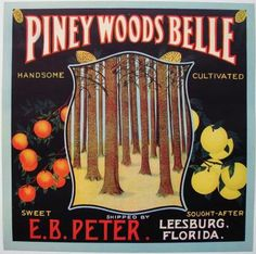 9X9 PINEY WOODS BELLE Vintage Leesburg Florida Crate Label