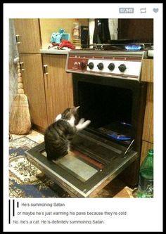 Demon Cat Beware