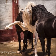 (91) The Soul of Horses - Photos
