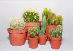 ядовитые комнатные растения в школе