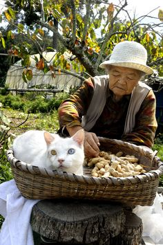 Fukumaru the Cat | MISAO, THE JAPANESE GRANDMOTHER AND HER FRIEND, FUKUMARU THE…