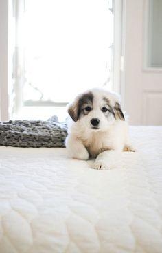 puppy http://www.poochportal.com/