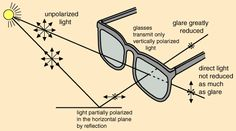 Diagram on how polarized lenses work