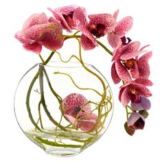 Found it at Wayfair - Fuchsia Orchid with Vine in Water