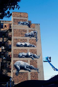 Six Wild Animals Take Street Art To The Next Level in Johannesburg, South Africa