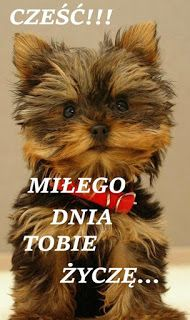 Weekend Humor, Cute Dogs, Good Morning, Fairy Tales, Diy And Crafts, Teddy Bear, Funny, Pictures, Animals