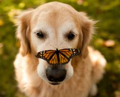 ♫ See The Doggie And Butterfly ♪