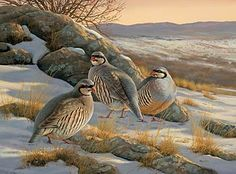 Rocky Ridge-Chukar Partridges by Rosemary Millette  |  Wild Wings