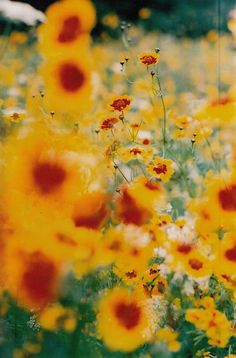 Bright flowers  #summer #mytumblr