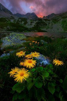 Ana glacial lake / Retezat mountains / Romania