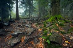 The forest floor Forest Floor, Sabbats, Geology, Mother Nature, Poland, Fairy Tales, Environment, Scene, Europe