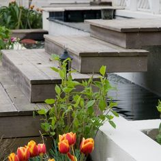 decking ideas - love this; the water the floating steps the tulips - everything!