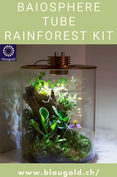 The Baiosphere Tube Rainforest Kit incl.Scapingtools - a glass atmosphere for your self-designed, shining piece of nature. The brightness and color temperature of the LEDs can be adjusted to suit any ambience. #Baiospherelovers #Baiosphereaustria #Baiospherexl #Baiospherelove Ficus Pumila, Self Design, Color Temperature, Kit, Terrarium, Tube, Canning, Glass, Home Decor