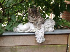 Ollie in de tuin op de engel
