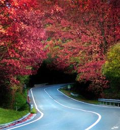 """sunsurfer: """" Flowered Tree Tunnel, Basque Country, Spain photo by Jabi Artaraz """" Beautiful Roads, Beautiful World, Beautiful Places, Beautiful Pictures, Places To Travel, Places To See, Images Murales, Tree Tunnel, Basque Country"""
