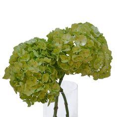 FiftyFlowers.com - Hydrangea Lime Green Flower 40 for $200.00