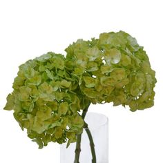FiftyFlowers.com - Hydrangea Lime Green Flower