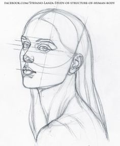 Anatomy Drawing Tutorial Study by StefanoLanza - Human Body Drawing, Human Body Art, Human Figure Drawing, Figure Drawing Reference, Face Structure Drawing, Face Proportions Drawing, Human Human, Anatomy Sketches, Anatomy Drawing