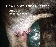 Have you ever visited a bad vet or bad vet emergency clinic? How do we trust our vet with our pets? Read more about true stories for vet ethics.