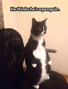 17 Funny Cat Memes That Will Make You Laugh Out Loud 13