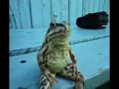 Sitting frog by flashman2