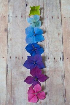 Hydrangeas are my favorite flower. They change color based on the pH balance of the soil. |  In zure gronden worden de bloemen blauw, in basische gronden roze en in pH-neutrale bodems paars. #hortensia #ph #kleurenleer