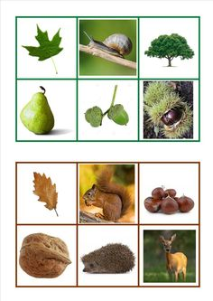 Matching : Picture to Picture Color and shape Autumn Activities For Kids, Fall Preschool, Preschool Science, Color Activities, Toddler Activities, Crafts For Kids, Tree Study, Color Games, Montessori Materials