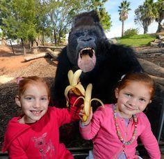The 'OMG, Rude!'---30 Greatest Animal Photobombs of 2013