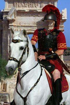 4d1fe7dda University of Southern California Trojans - Traveler VII ( the white horse  ) is the mascot