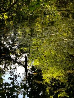 Reflections photo by chris