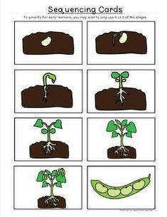 Life Cycle of a Bean Plant Printables Preschool Learning Activities, Home Learning, Educational Activities, Sequencing Activities, Writing Center Kindergarten, Monster Cookie Bars, Bean Plant, Parts Of A Plant, Class Decoration