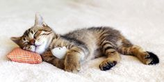 23 Unbelievably Cute Pictures of Sleeping Animals Curated by PlushBeds | http://plushbeds.life/best-night-sleep-p