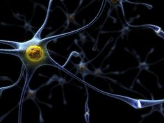 Alzheimer's disease isn't just for seniors. Find out how Alzheimer's and six other types of dementia can affect cognitive function from an early age. Stem Cell Research, Micro Photography, Cellular Level, Brain Waves, Stem Cells, Science And Nature, Spirit Science, Science Art, Human Body