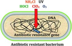 Graphical abstract: Potential impacts of disinfection processes on elimination and deactivation of antibiotic resistance genes during water . Microbiology, Drinking Water, Evolution, Abstract, Summary