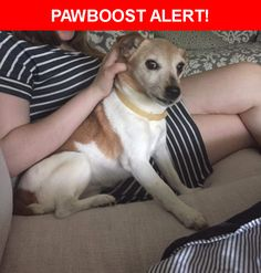 Please spread the word! Lana was last seen in King Of Prussia, PA 19406.  Description: Lana is a 16 year old Jack Russell terrier. She was not wearing her collar when she got out, only her flea collar. She is also hard of hearing.  Nearest Address: 565 Hughes Road, King of Prussia, PA, United States