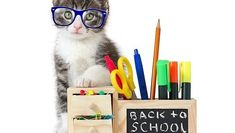 While most cats may appear stoic and independent in nature, the sudden disappearance of you or your kids during the day can cause a lot of stress. Here's how to make the transition back to the grind of the school year for your cat as easy and calm as possible. All About Cats, 5 Ways, Back To School, Seasons, Kids, Stress, Calm, Nature, Young Children