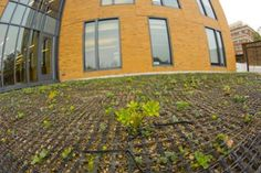 BU's First Green Roof | BU Today | Boston University