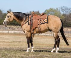 My Horse, Horse Tack, American Quarter Horse, Horse Stuff, Beautiful Horses, Friends In Love, Animals, Life, Arabian Horses