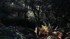 Portugal Terra - A Natureza em Portugal | by aidnature.org A documentary about the natural beauty spanning the entire Portuguese territory. -------------------------------------- Uma longa metragem documental sobre a beleza natural de norte a sul de Portugal.
