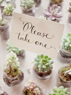 Wedding Reception Ideas For Guests Bridal Musings Ideas For 2019 Bridal Musings, Succulent Wedding Favors, Unique Wedding Favors, Succulent Gifts, Wedding Tokens, Wedding Guest Gifts, Wedding Thank You Gifts, Succulent Ideas, Wedding Souvenir