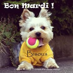 Bon Mardi, Father, Teddy Bear, Cats, Animals, Everlasting Love, Bonjour, Alcohol Intoxication, Handsome Quotes