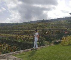Reposted from @alina.blumkhen  #vino #wine #etna #winelover #instasicily #igsicilia #vineyard #sicily #winery #vigneto #winerytour #gambinovini #winetasting #winetourism #vinery #cellar #grapewines #whatsicilyis #igcatania #igsicilia #igsicilia #winemakers #ilovewine #wineoclock #grapevines  Винодельня Gambino Vini Красота невероятная на высоте 1600 м Ммм пошли дегустировать Sicily you are wonderful@Gambinowine we'll return by all means…
