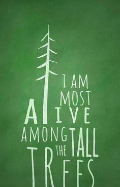 I am most alive among the tall trees