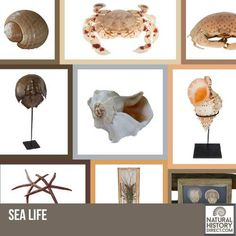 Sea Life - Shop the collection, website updated daily, click here now www.NaturalHistoryDirect.com