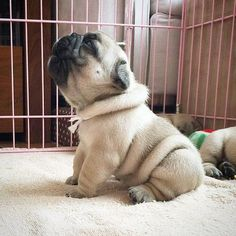 Look at those adorable rolls