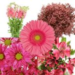 @myzsrule this is a wholesale flower site..they have free shipping! they have a lot of options and combo packs with a lot of different flowers. This is the Monochromatic Pink Combo Pack. From Fifty Flower